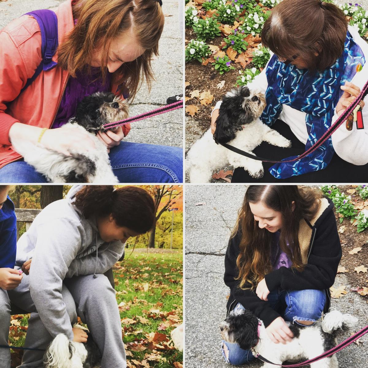 Collage of people petting dogs