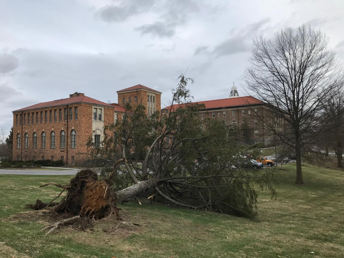 Campus Tree Down